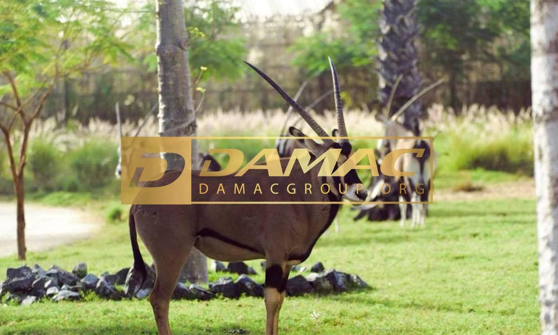 باغ وحش سافاری دبی